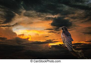 Raven at sunset - background, Raven on stormy sunset....