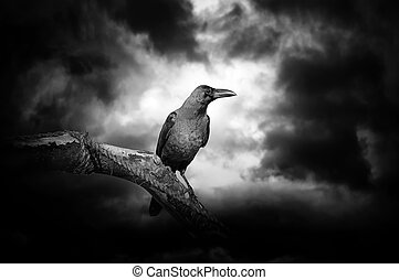 Raven on a branch - Raven on a barren branch with the Moon ...