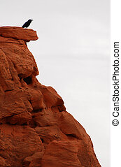 Raven On Red Cliff