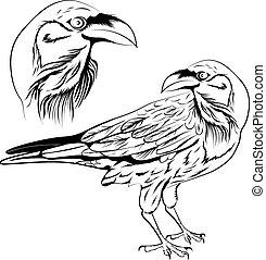 Raven vector