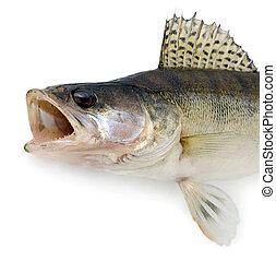ravenous, visje, monster, vrijstaand