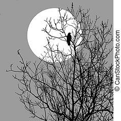 ravens, boompje, illustratie, zittende