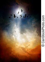 Ravens in dark sky - Sunset, flock of flying ravens, crows...