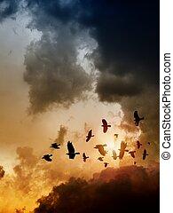 Ravens in dark sky