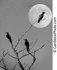 ravens on a dry tree