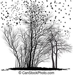 Ravens on a group of acacia trees