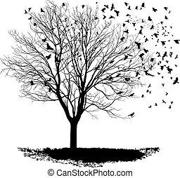 Ravens on a maple tree