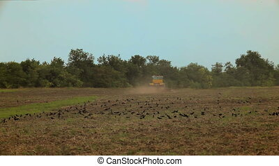 Ravens on the field - Big tractor plow a field on which sits...