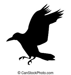 ravens, witte , vector, silhouette, achtergrond