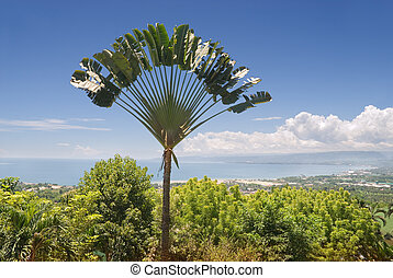 Panorama over a tropical bay and city with an exotic ravinala (traveler's) palm (Ravenala madagascariensis) tree silhouette in front. Macajalar Bay, Malasag, Cagayan de Oro, Mindanao, Philippines.