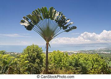 Ravinala palm over tropical bay - Panorama over a tropical ...