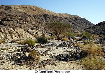 Ravine and mountain in Negev desert in Israel...