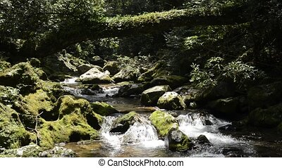 Ravine flowing brook beside mossy rock under fallen tree and...