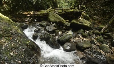 Ravine flowing brook beside various sizes mossy stones and...