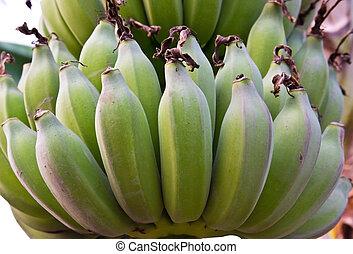 Raw banana Green - banana in farm