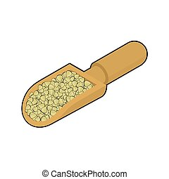 Raw buckwheat in wooden scoop isolated. Groats in wood shovel. Grain on white background. Vector illustration