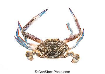 Raw crab