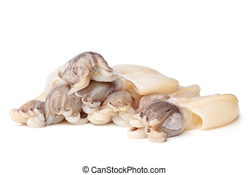 Raw cuttlefish on white background