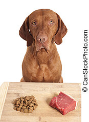 dog making a decision over kibbles versus raw diet