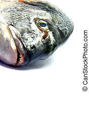 Raw fish 2