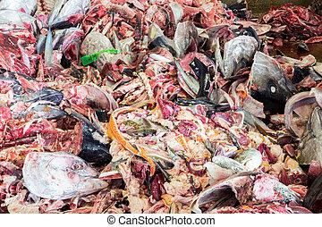 Raw Fish garbage