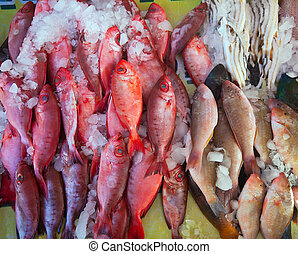 Raw  fish on market counter