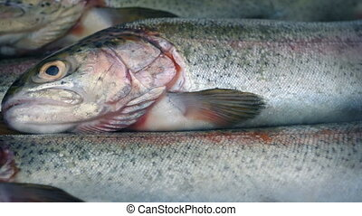 Raw Fish Rotating Closeup - Raw fish rotating macro shot