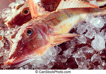 Raw gurnard fish on ice - Close up on pair of dead bony raw ...