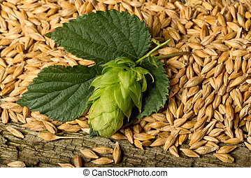 raw matereial for beer production - hops and barley