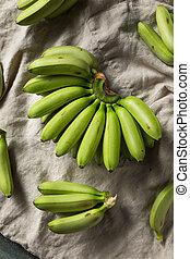 Raw Organic Unripe Green Baby Bananas