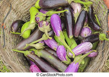 raw organic vegetables, eggplant