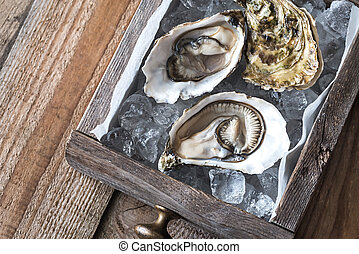 Raw oysters in the wooden box