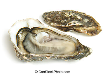 Raw oysters on a white background