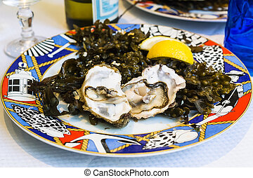 raw oysters on plate in local fish restaurant