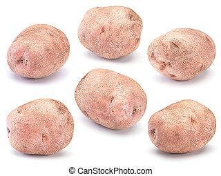 Raw potato vegetable closeup isolated on white