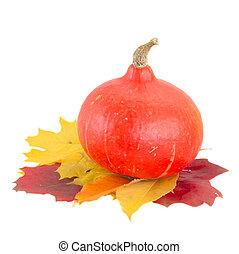 raw pumpkin and fall leaves