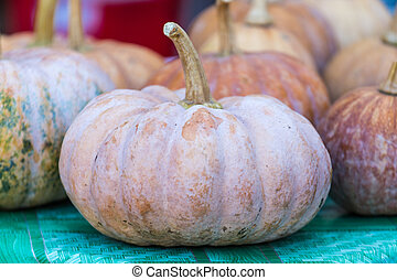 raw pumpkins on market