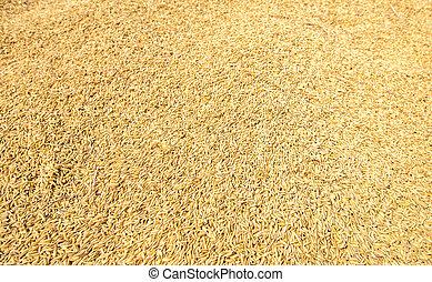 raw rice seed