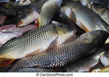 Raw river fish