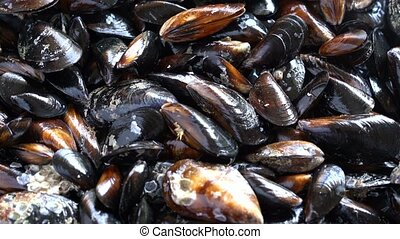 Raw sea mussels rotating , view with little perspective
