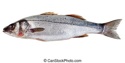 raw seabass fish isolated on white background