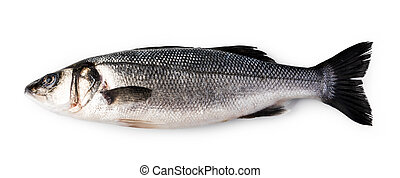Raw Seabass isolated on white background