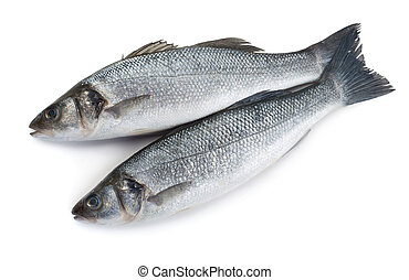 Raw seabass - Two raw sea bass fishes isolated on white...