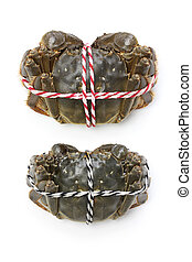 raw shanghai hairy crabs