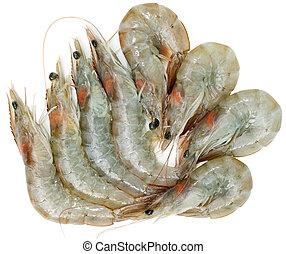 Raw Shrimps - Group of raw shrimps isolated on white