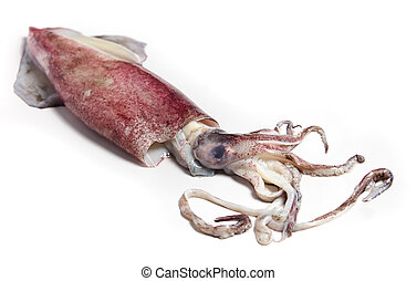 Raw squid
