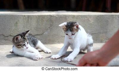 rayé, chats, deux, jouer