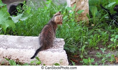 rayé, jeux, chaton, peu, herbe