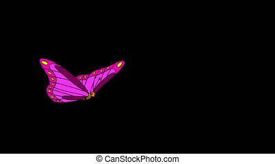 rayé, mouches, pourpre, papillon, alpha