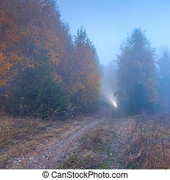Ray of light in the misty autumn forest
